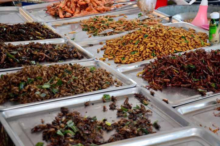 56761447 - exotic food fried insect