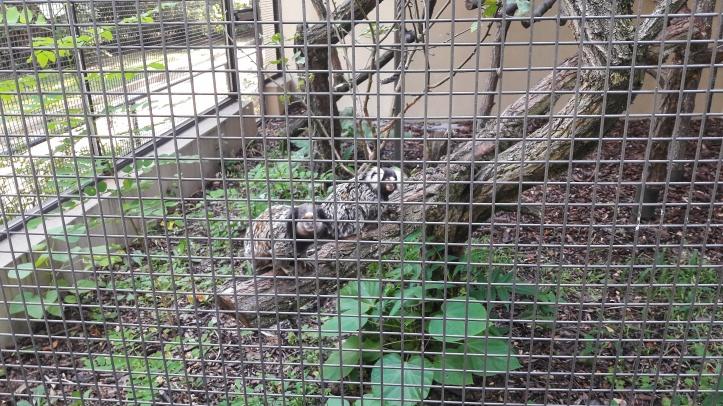 stara-zoo-v-poznani